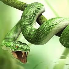 soñar con serpientes y loteria